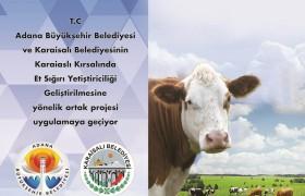 Karaisalı Kırsalında Et Sığırı Yetiştiriciliğinin Geliştirilmesi Proje Uygulama Rehberi