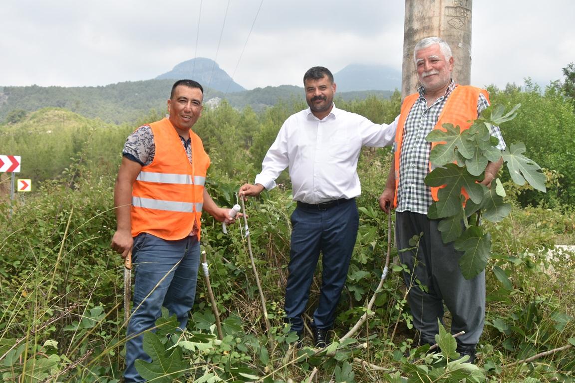 Karaisali Belediyesi Yabani Agaclari Asiliyor (2)